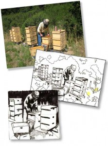 Bee photo and sketches